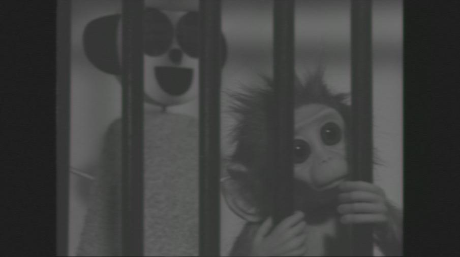 White Robot - Monkey Love Experiments