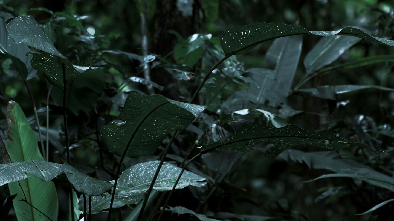green_mansions_02