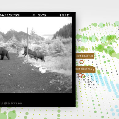 bear-71-interactive-documentary